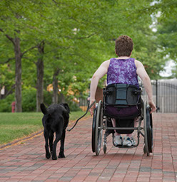 Wheelchair user and dog on stone path in park